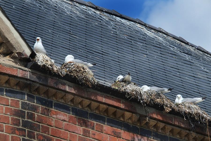 madárriasztók